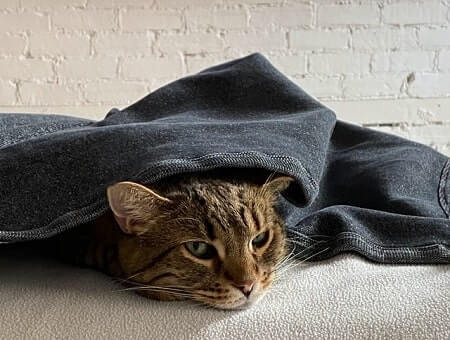 Cats feel secure hiding under blankets