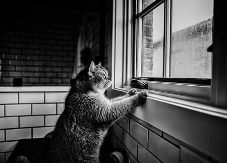 Cats paw on windows to either be let out or let in