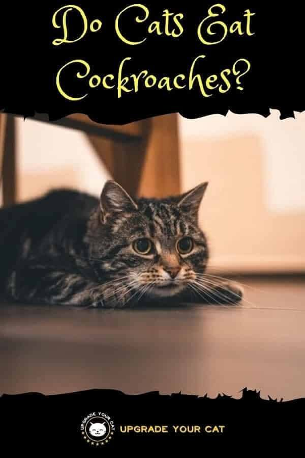 Do Cats Eat Cockroaches