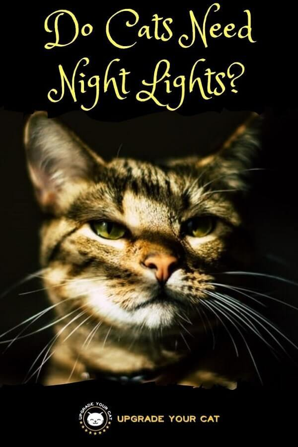 Do Cats Need Night Lights