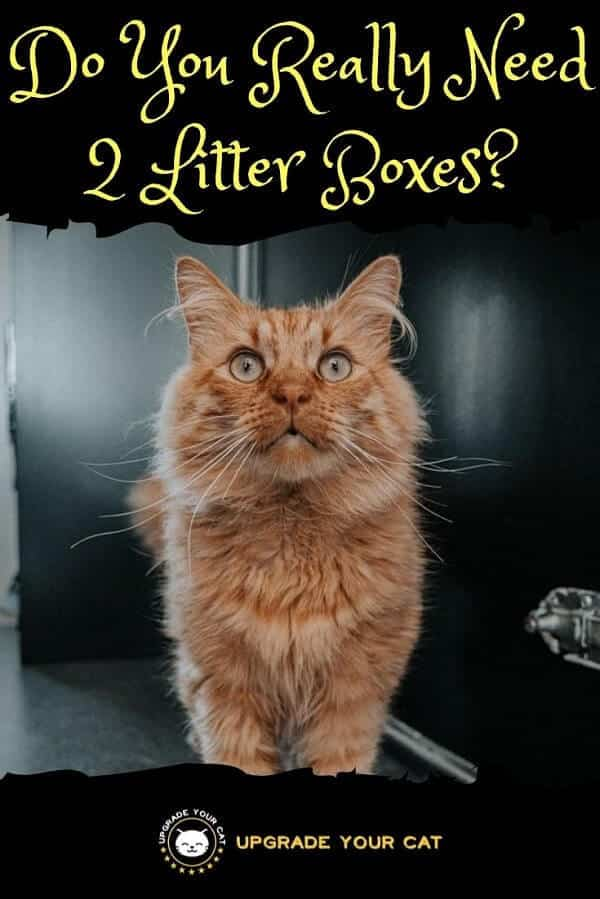 Do You Really Need 2 Litter Boxes