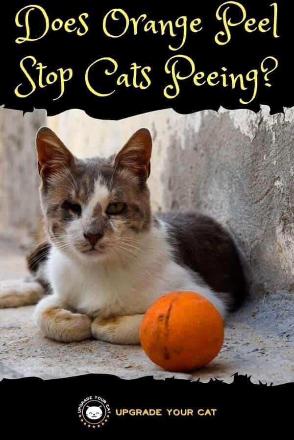 Does Orange Peel Stop Cats Peeing