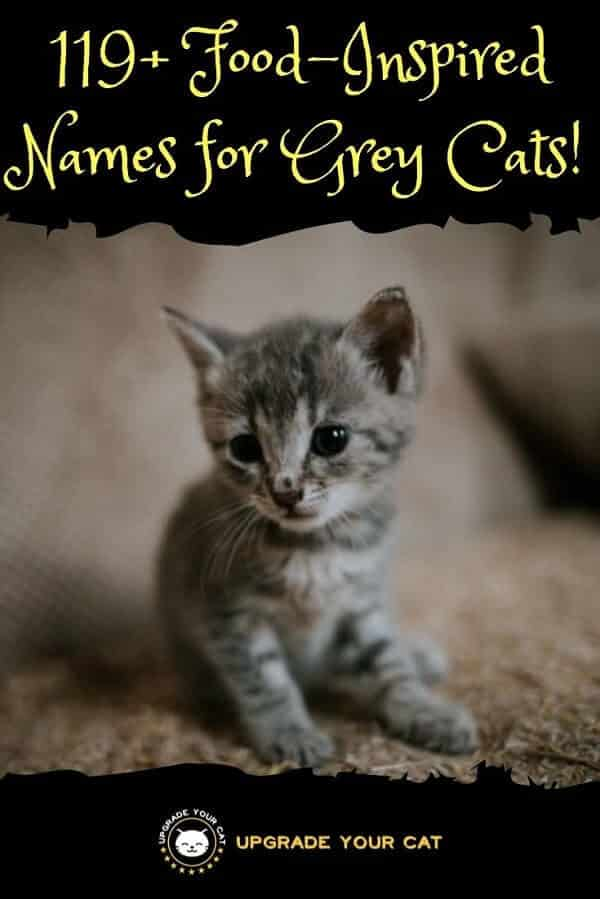 Food Names for Grey Cats