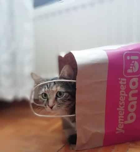 Indoor cat being curious looking around