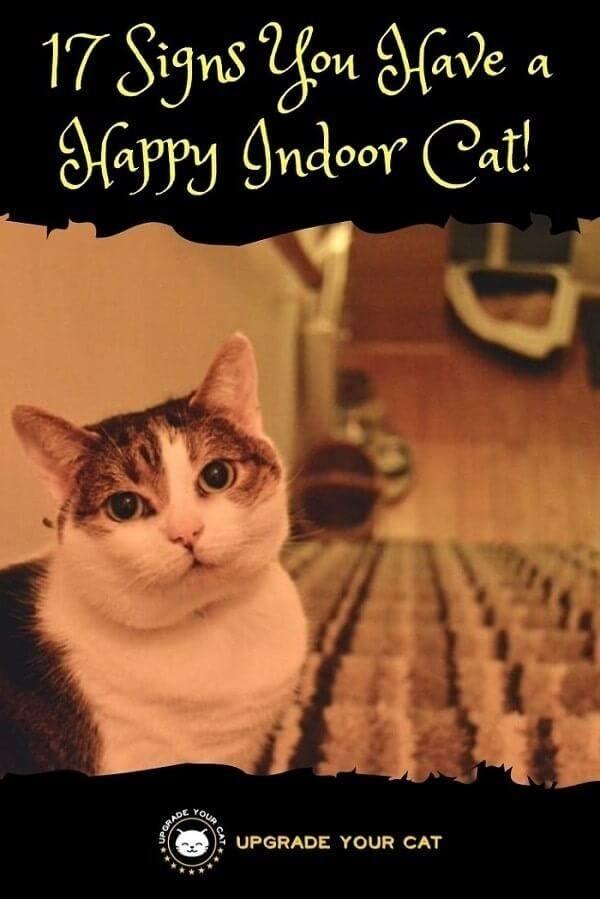 Signs of a Happy Indoor Cat