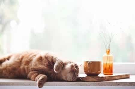 Some Tea-Related Words That Could Make a Great Kitty Name
