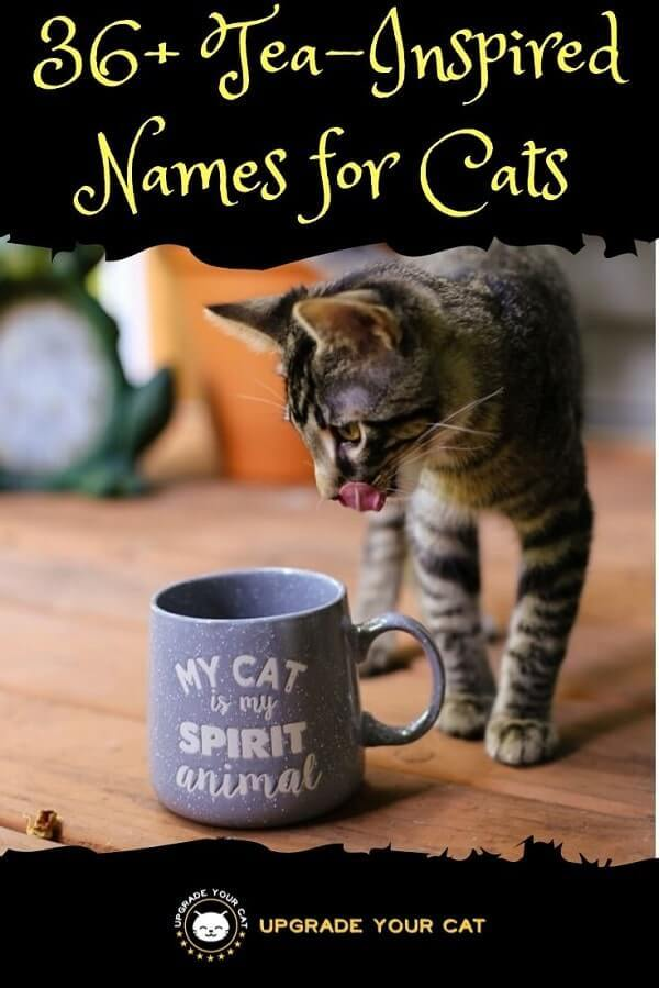 Tea Names for Cats