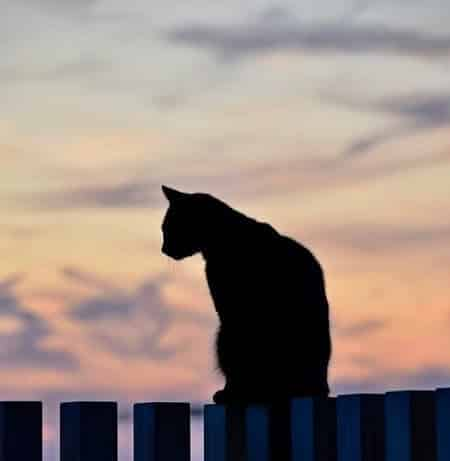 The Downside to Black Cat Superstitions
