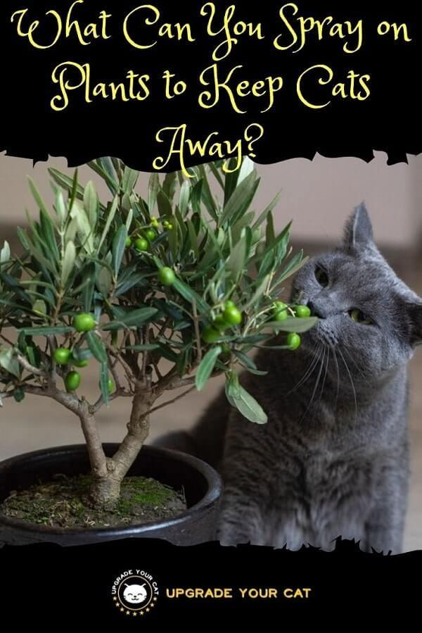 What Can You Spray on Plants to Keep Cats Away
