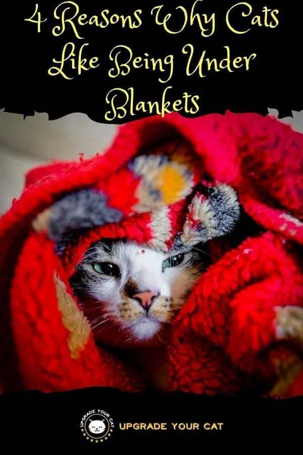 Why Do Cats Like Being Under Blankets