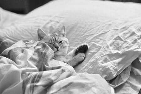 Why Do Cats Sleep on Pillows