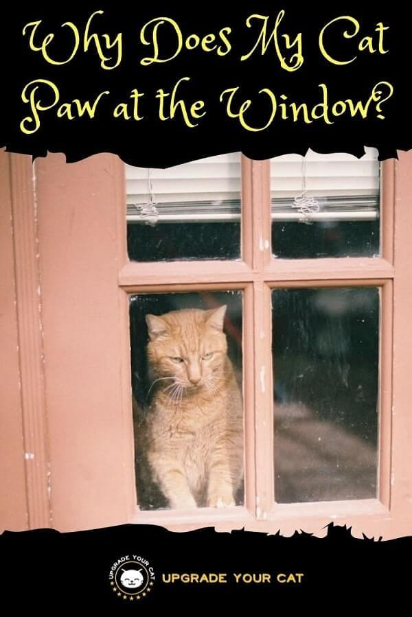 Why Does My Cat Paw at the Window