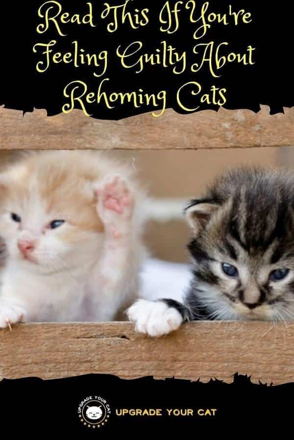 Feeling Guilty About Rehoming Cats