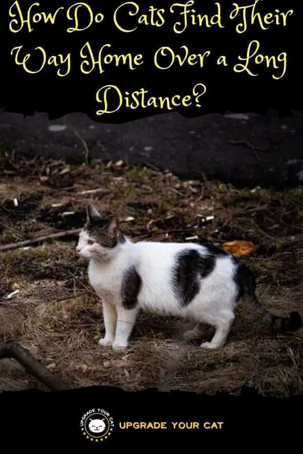 How Do Cats Find Their Way Home Over a Long Distance