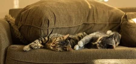 How to Use Valerian Root to Calm Cats