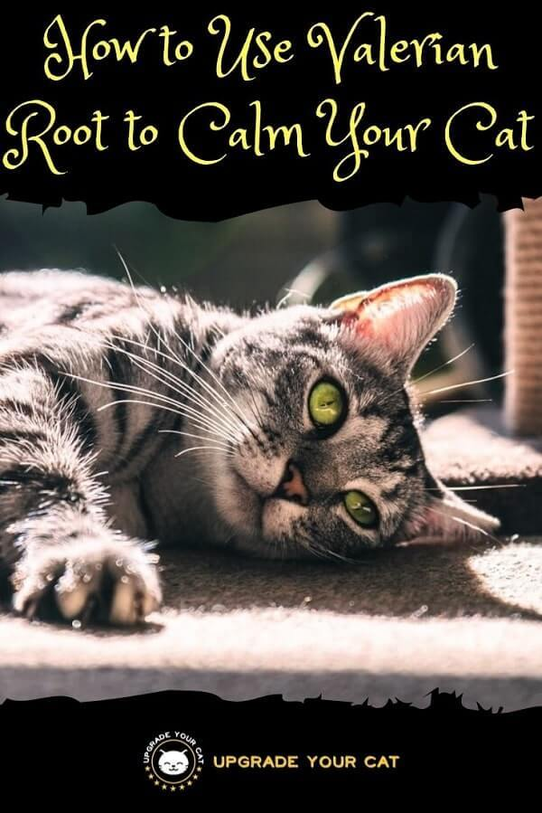 Valerian Root to Calm Cats
