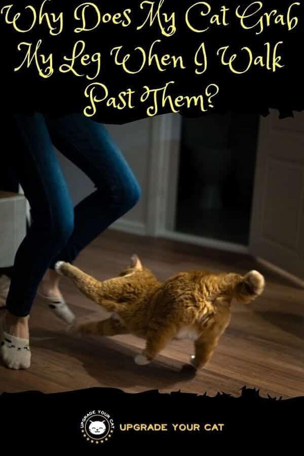 Why Does My Cat Grab My Leg When I Walk