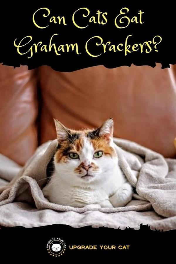 Can Cats Eat Graham Crackers