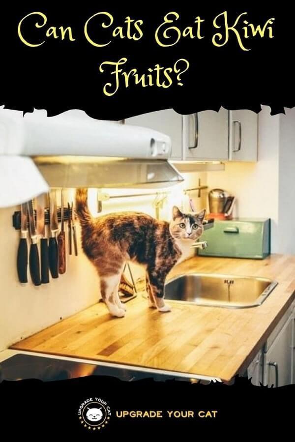 Can Cats Eat Kiwi