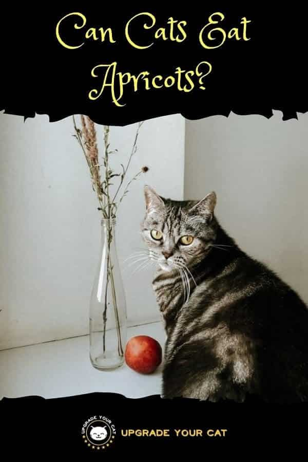 Can Cats Eat Apricots