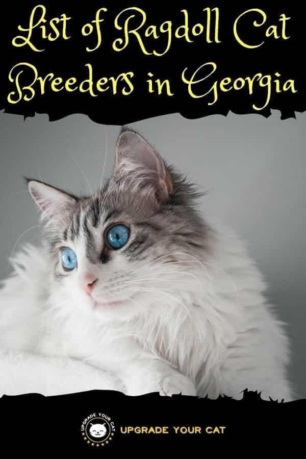 Ragdoll Cat Breeders in Georgia