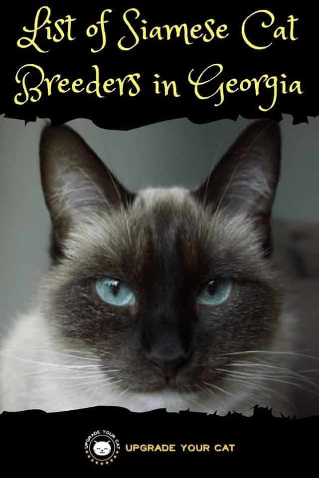 Siamese Cat Breeders in Georgia