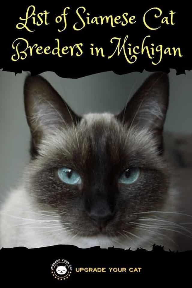 Siamese Cat Breeders in Michigan