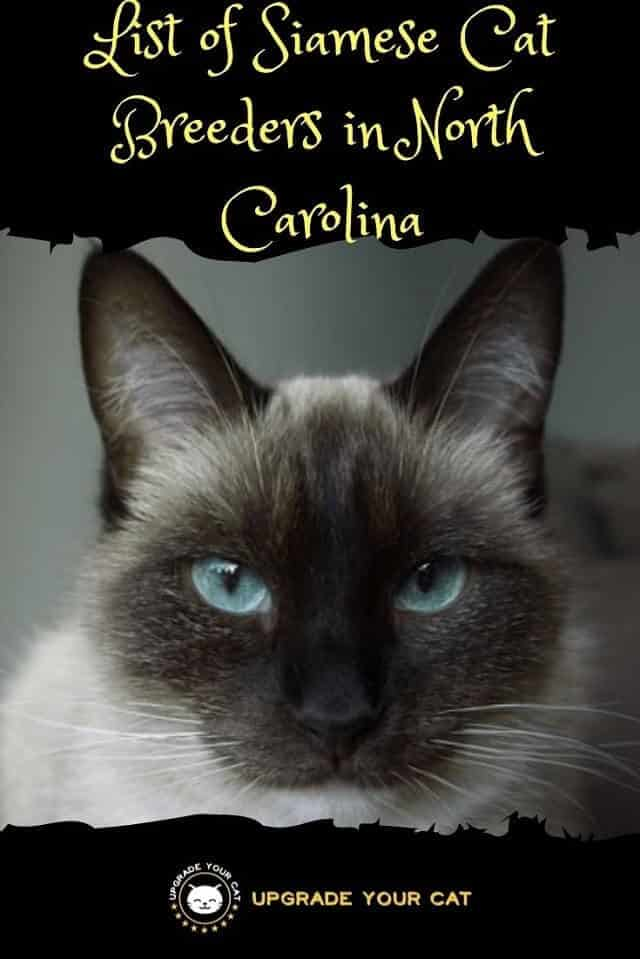 Siamese Cat Breeders in North Carolina
