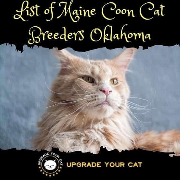 Maine Coon Cat Breeders Oklahoma