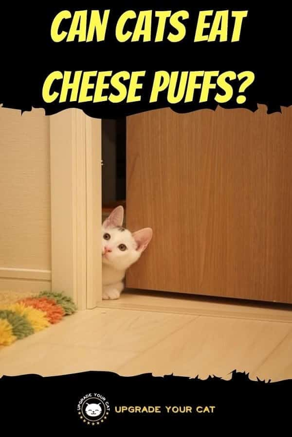 Can Cats Eat Cheese Puffs