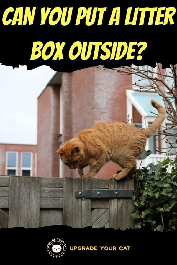Can You Put a Litter Box Outside