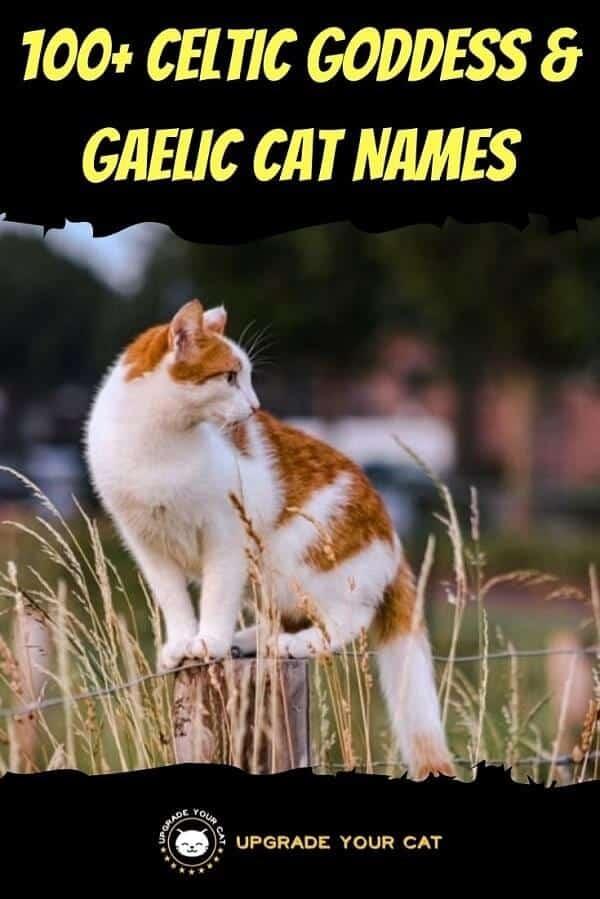 Celtic Cat Goddess Names