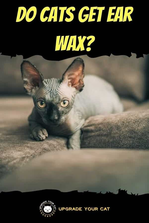 Do Cats Have Ear Wax