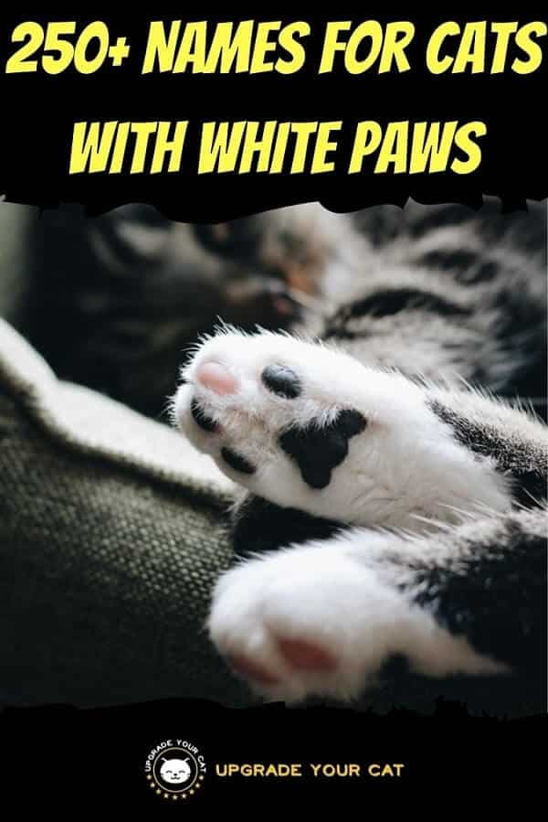Names for Cats With White Paws