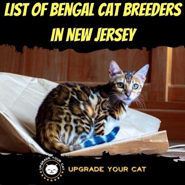 Bengal Cat Breeders in New Jersey