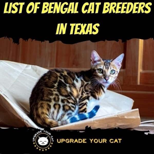 Bengal Cat Breeders in Texas