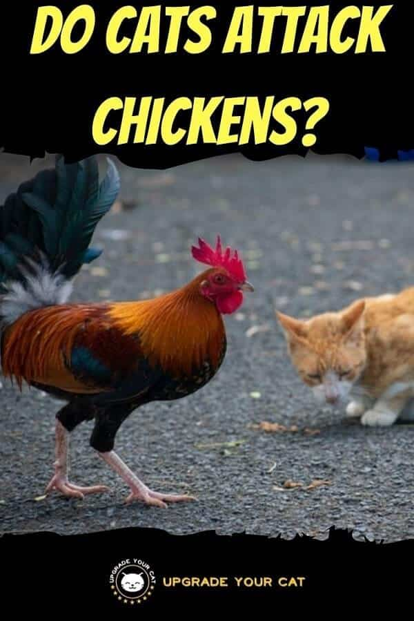 Do Cats Attack Chickens