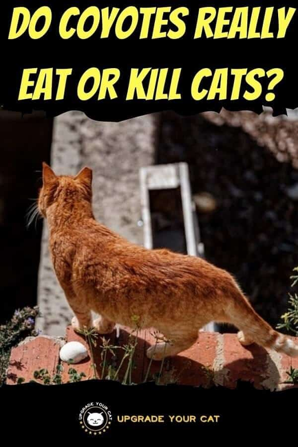 Do Coyotes Eat Cats
