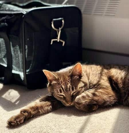 How to Stop Your Cat Sleeping in Her Carrier